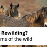 ECOS 38 (1): Hard Brexit - Soft Rewilding?