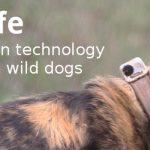ECOS 38 (2): A dog's life