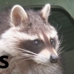 ECOS 38 (3): Zoo Futures