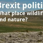 ECOS 38 (3): Brexit politics – what place wildlife and nature?