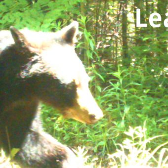 Learning in bear country: the journey to carnivore conflict mitigation