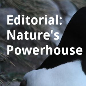 ECOS 39 (1): Editorial: Nature's Powerhouse