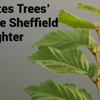 ECOS 39 (3): 'The city that hates trees' – Standing up to the Sheffield Street-Tree Slaughter
