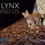 ECOS 39 (3): Book Review: THE LYNX AND US