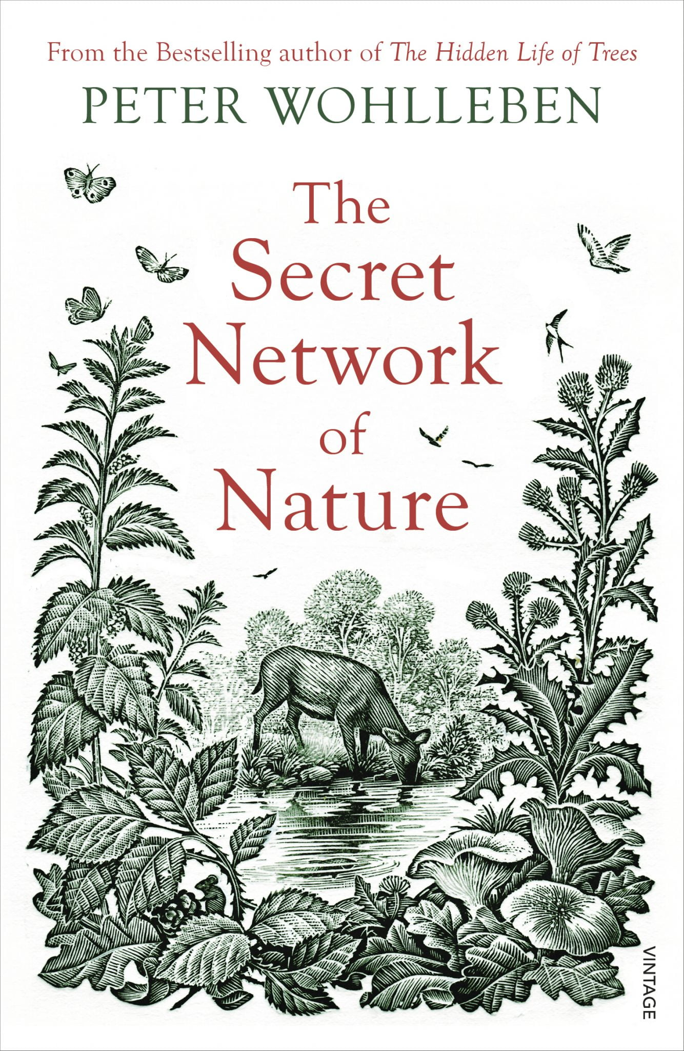 ECOS 40(5): Book Review: The Secret Network of Nature