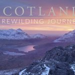ECOS 40(6): Book Review: Scotland - A Rewilding Journey