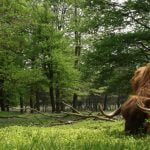 ECOS 40(6): Living with the wild: cores, connectivity and co-existence