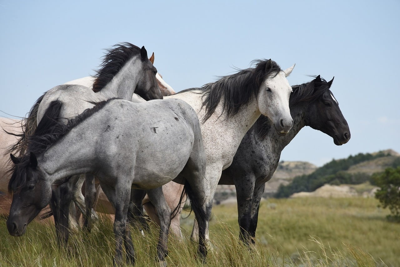 Horses for Nature: Equids and extensive grazing in Britain